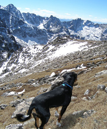 dangers for dogs hiking colorado
