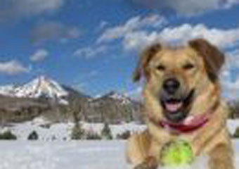 doggy daycare in steamboat springs